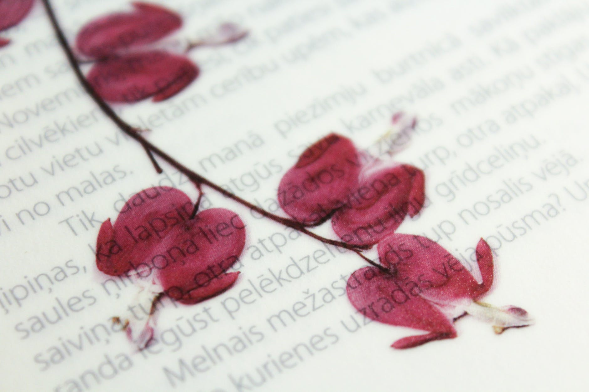 dried flowers with printed text