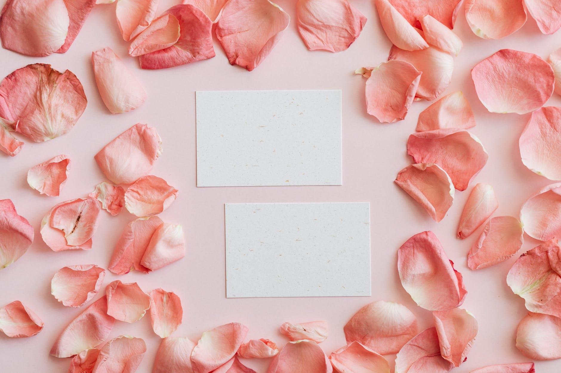 set of pink petals and cards